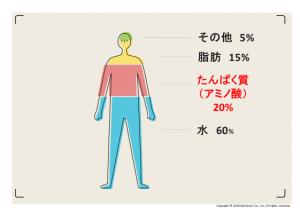 体の20%がアミノ酸でできている